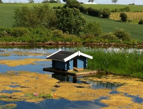 New des res duck kennel makes a splash!